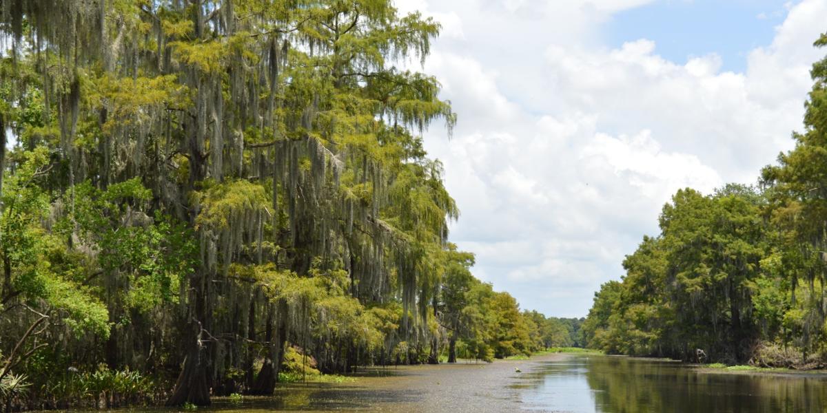 Blue Elbow Swamp