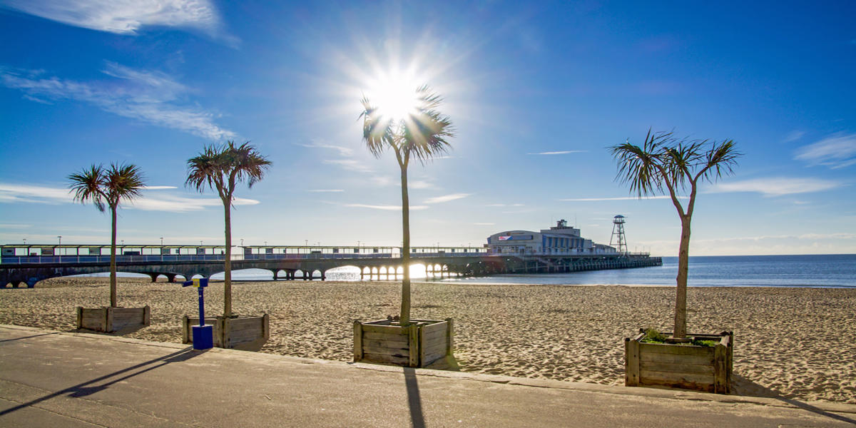 Palm trees in on Bournemouth Beach with the pier in the background.