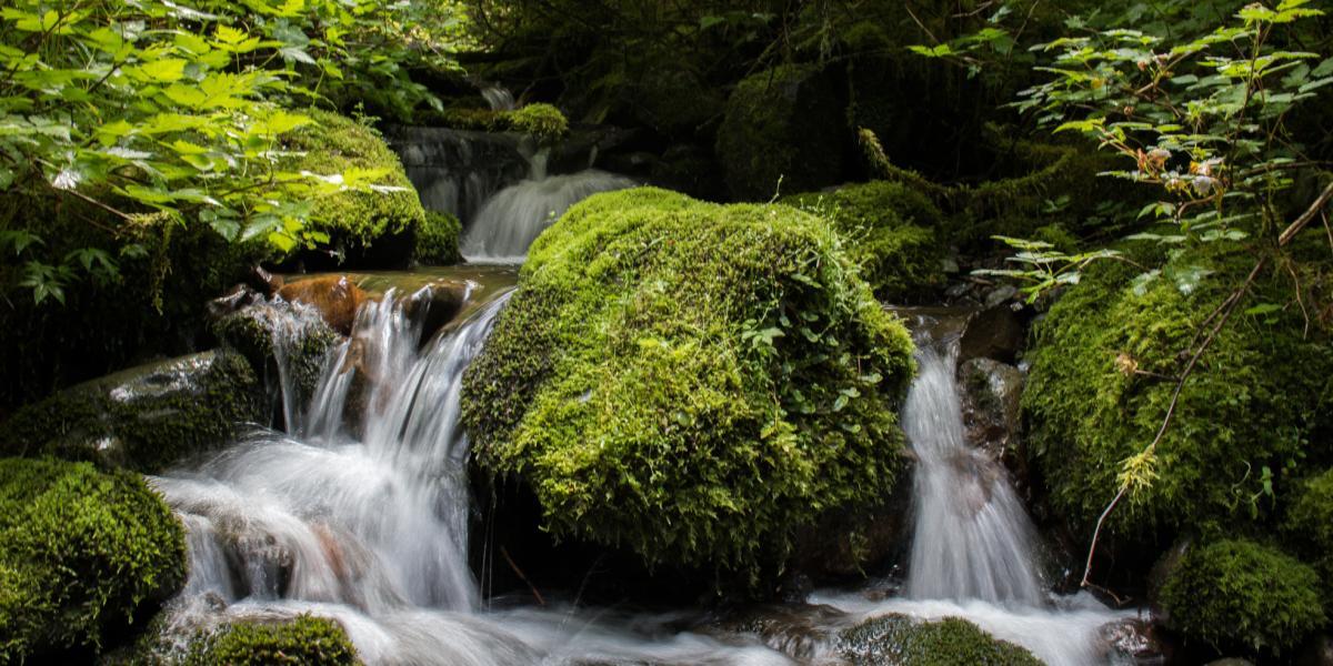 Pack Creek