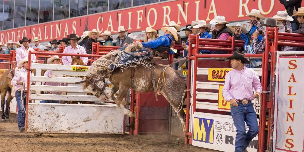 Saddle Bronc Rider at California Rodeo Salinas