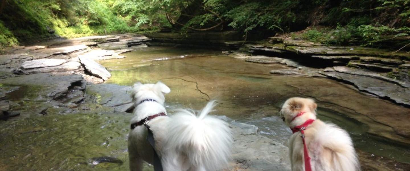 Happy Tails - The Best Dog-Friendly Hikes in the Finger Lakes