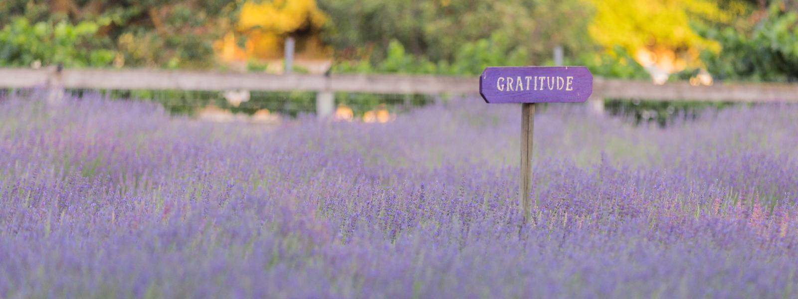 Harmony Lavender 2