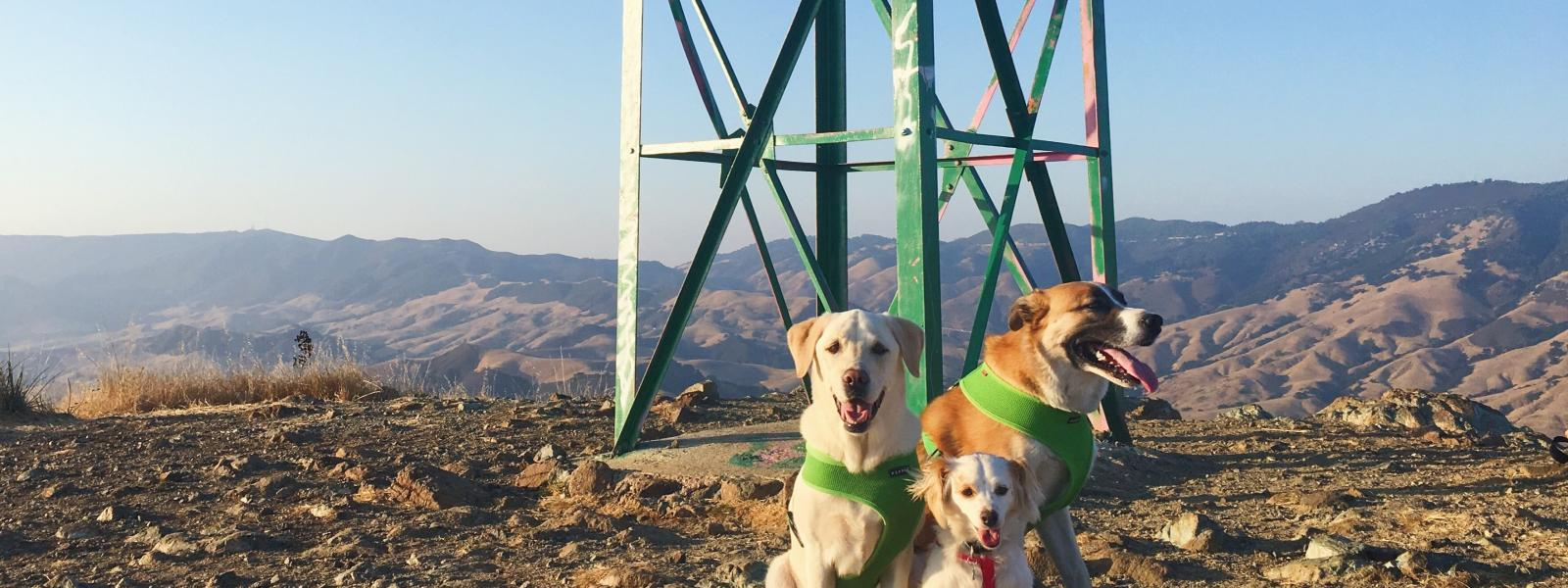 Dog-Friendly Hiking