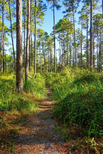 Hiking Trail in Sandhill Crane Wildlife Refuge Ocean Springs, MS