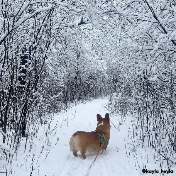 Cherry Hill, Dog in Snow