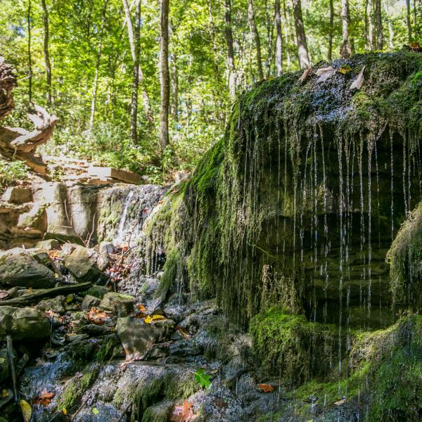 Water falling over mossy rocks at Leonard Springs Nature Park near Bloomington, IN