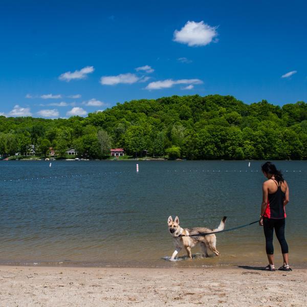 Lake Lemon Riddle Point Dog