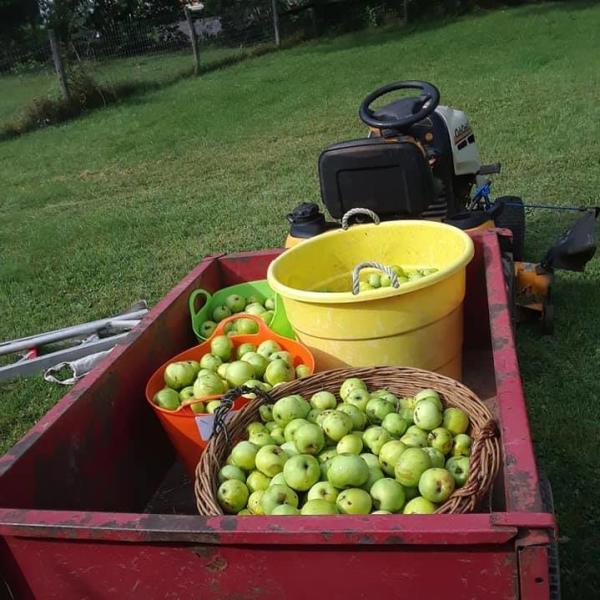 Galmor Farm Apples