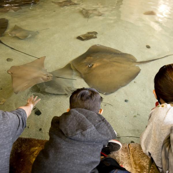 Stingray Bay at Fresno Chaffee Zoo