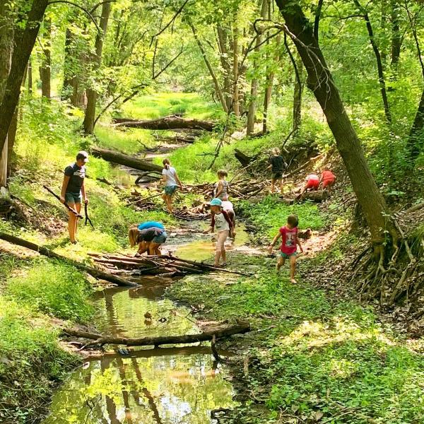Kids exploring a woods