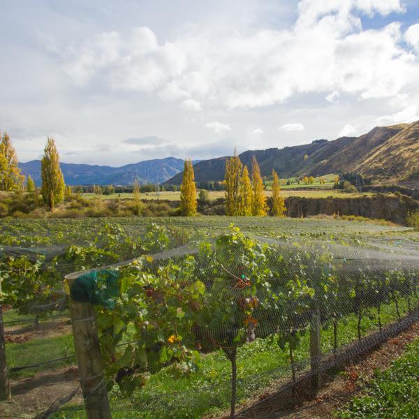 Chard Farm Winery and Vineyard