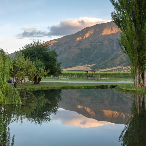 Kinross vineyard views
