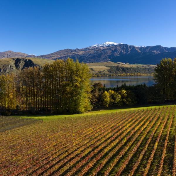 Lake Hayes Autumn