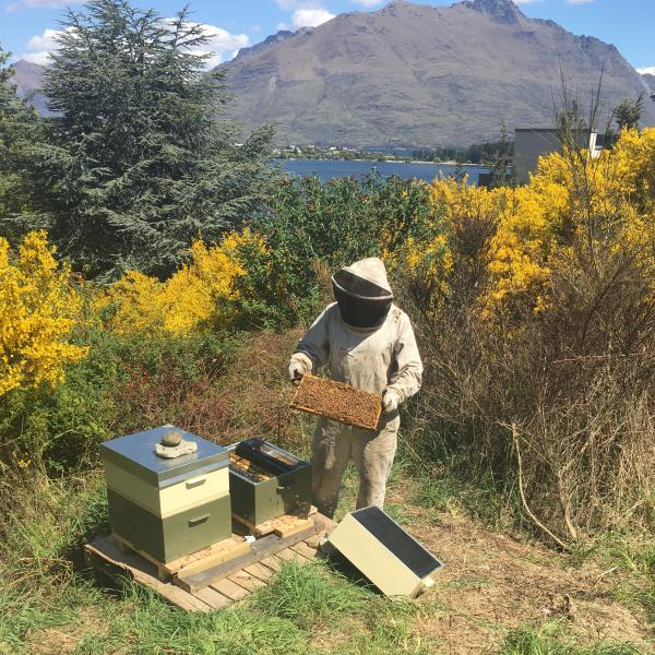 The Rees Queenstown beehives