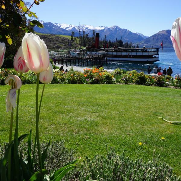 Walter Peak Tulips