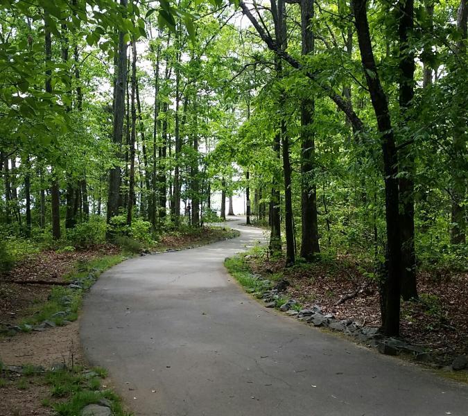Jetton Park Trail Forest Recap (Cyndi)