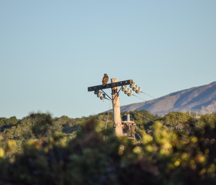 hawk bird wildlife