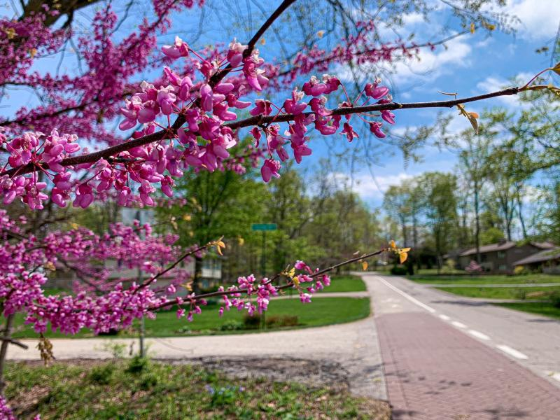 Elm Heights Neighborhood Greenway during spring