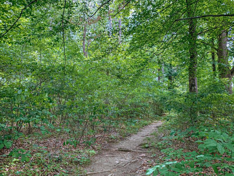 Trail path through Latimer Woods
