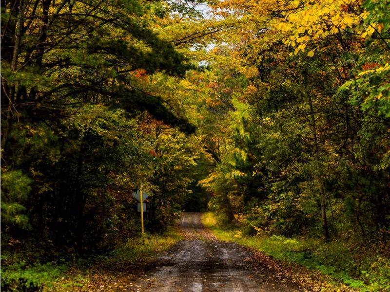 Fall Hiking Trail