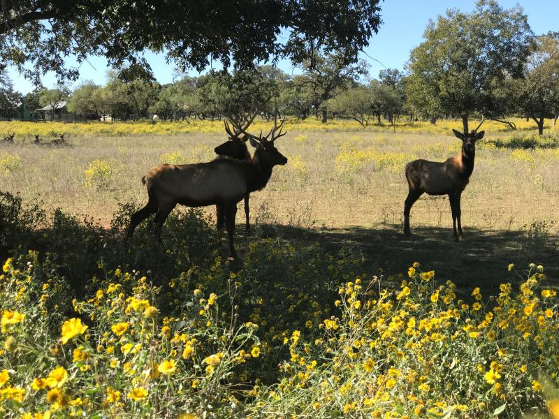 Wildlife in Texas Hill Country
