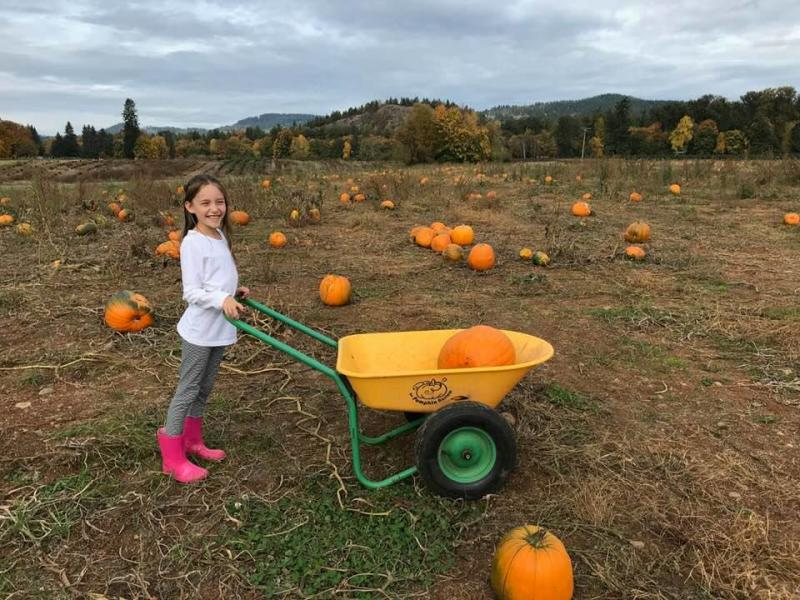 Young girl pushes a wheel barrel with a pumpkin in it through a pumpkin patch in the fall.