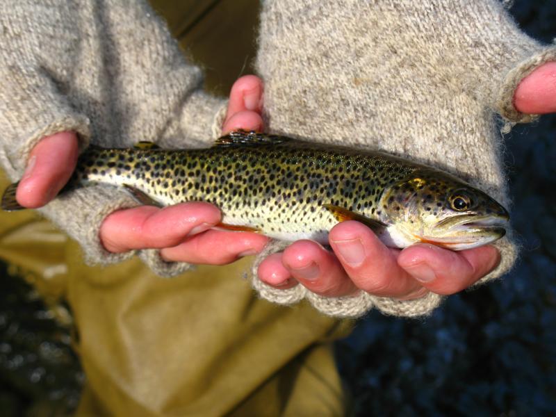Catch & Release Fishing by Greg Yamada