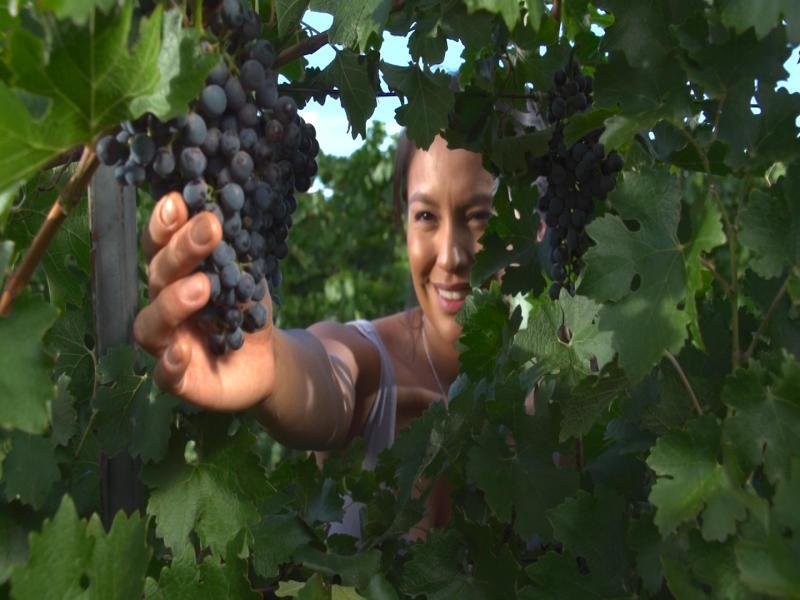Deming Wine
