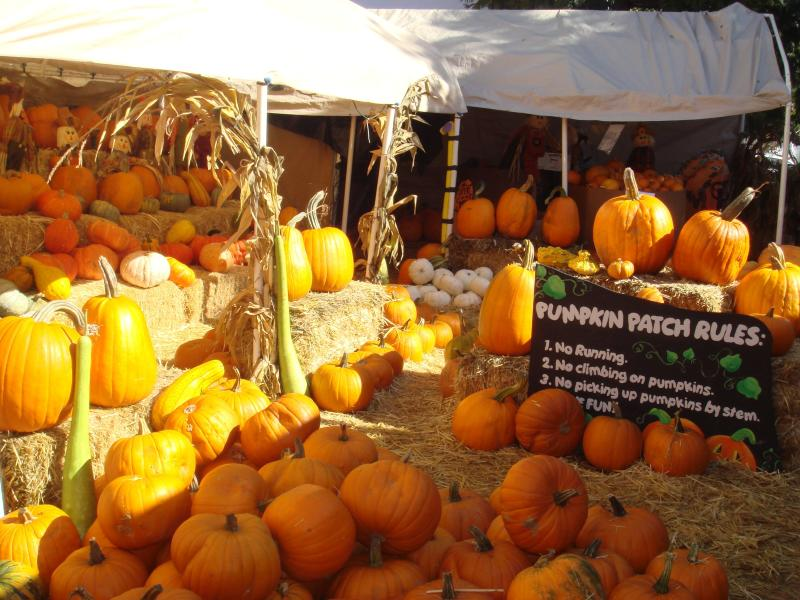Pumpkins of all sizes decorate the stands at the Piedmont Pumpkin Patch in Oakland.
