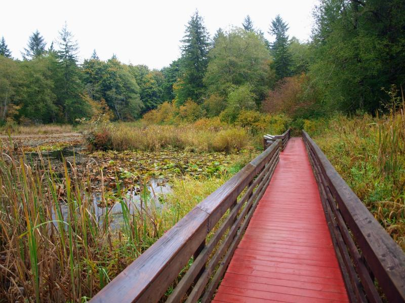 A boardwalk leads into the forest along McLane Creek Nature Trail.