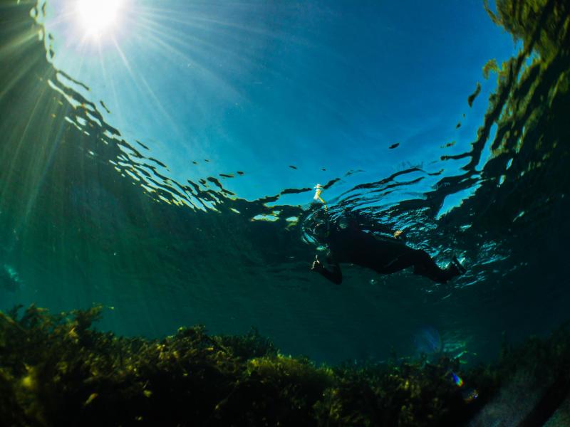 Snorkeler exploring the surface of Spring Lake