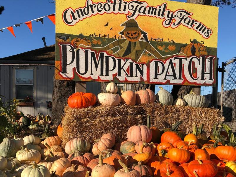 Pumpkin Patch at Andreotti Family Farm in Half Moon Bay, California