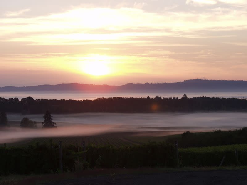 A foggy morning in the Willamette Valley