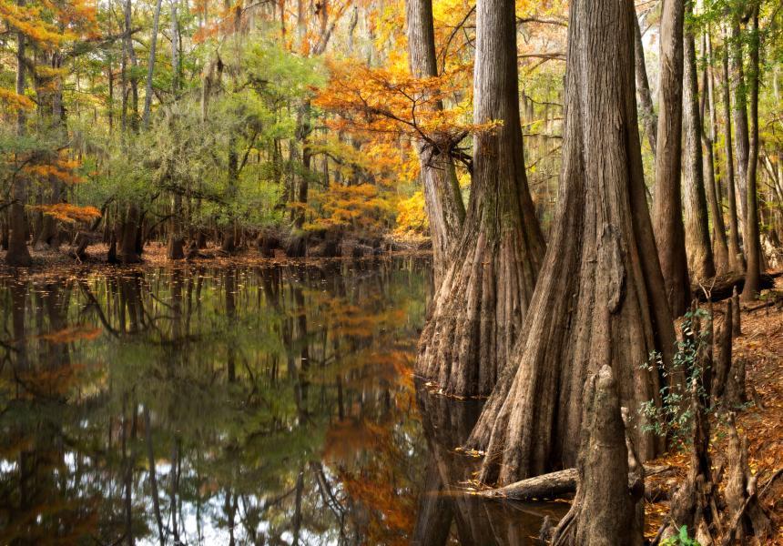 Cedar Creek at Congaree National Park