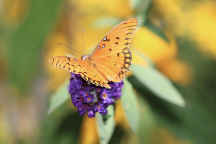 ABQ BioPark Botanic Garden Butterfly