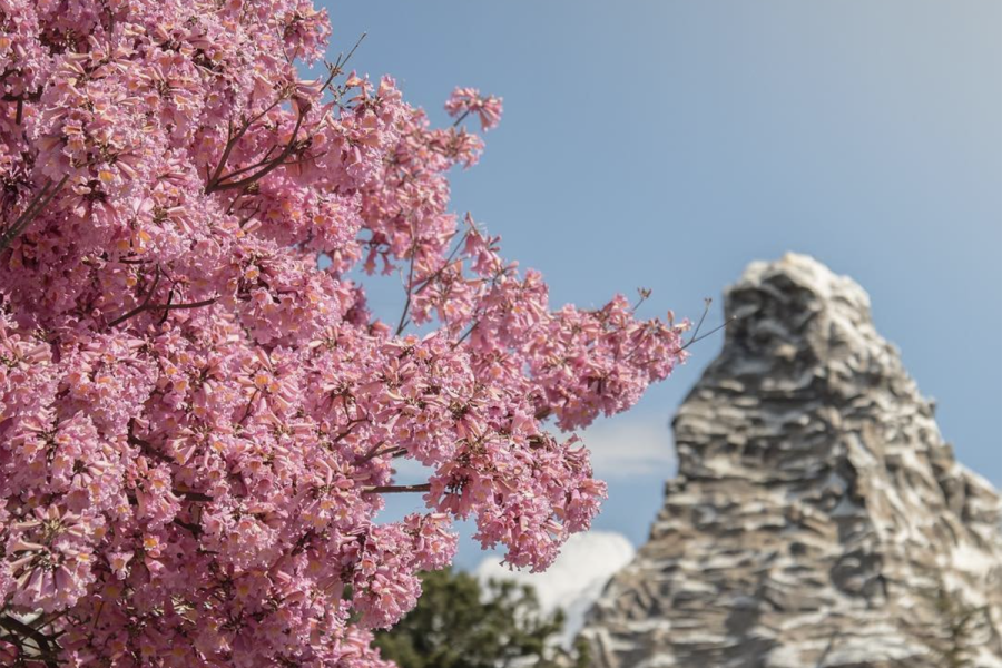 Matterhorn in Spring at Disneyland Park