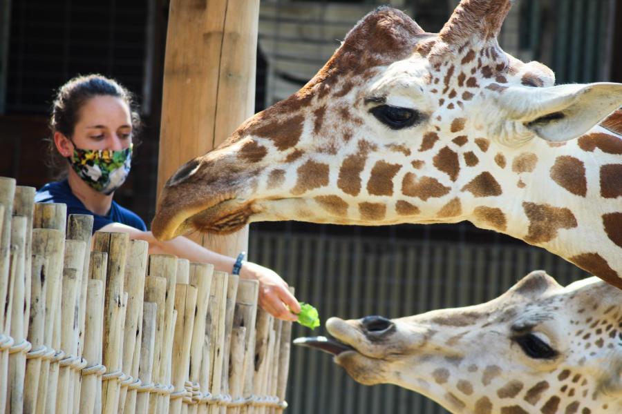 Chattanooga Zoo_Giraffe