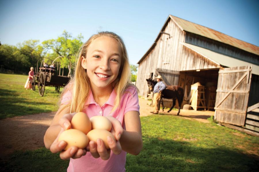 Eggs at Sauer Beckmann Farm