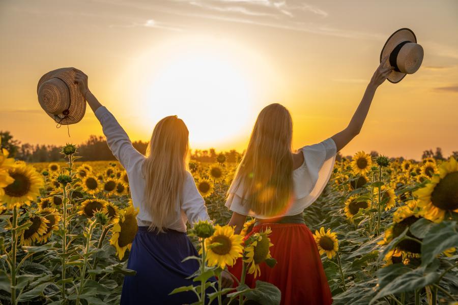 Sunflower Stock
