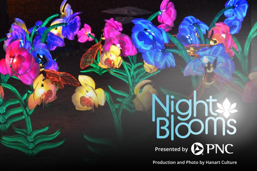 Night Blooms Huntsville Botanical Gardens