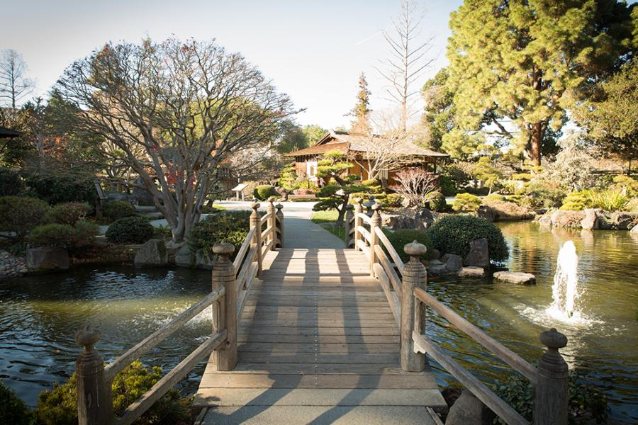 Japanese Tea Garden in San Mateo's Central Park