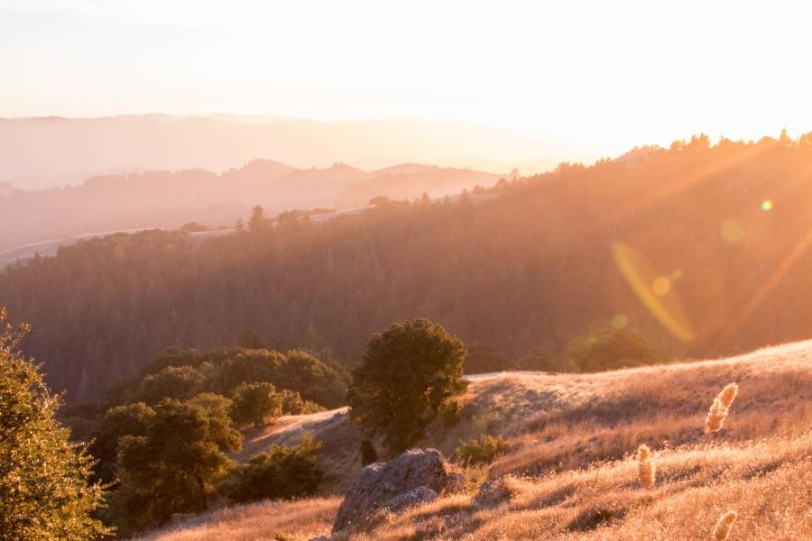 CROPPED -  Bright Sun at La Honda Creek Space Preserve
