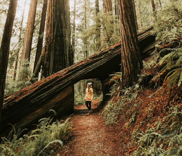 Travel Info for the Redwood Forests of California, Eureka