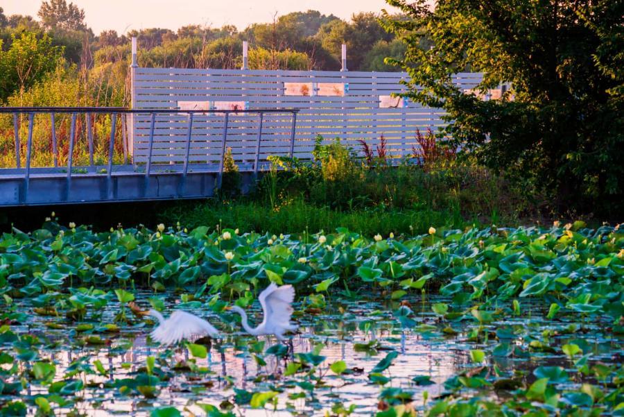 Pracht Wetlands Park in Wichita