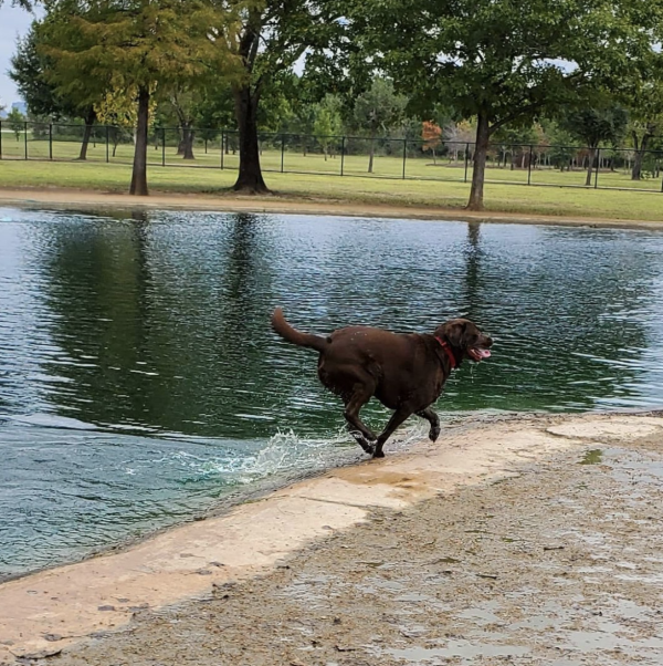 Millie Bush Dog Park