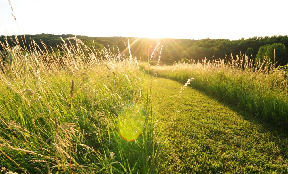 Hiking trail at Ganondagan State Historic Site, trail surrounded by tall grass