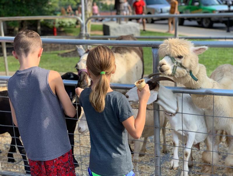 kids petting lamas and goat