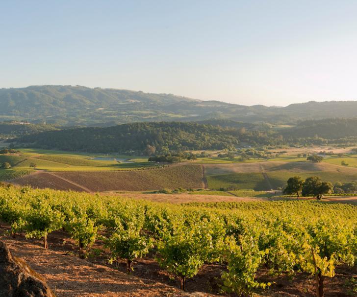 Kunde Winery Sonoma Valley