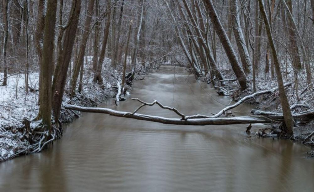 Bicentennial Woods