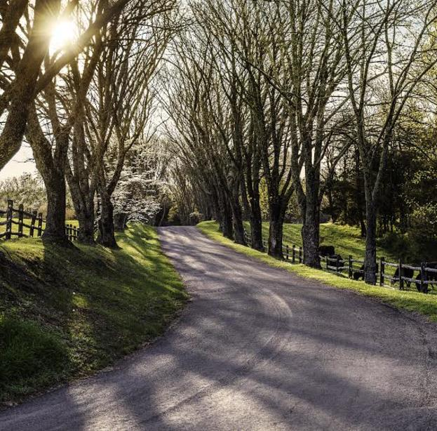 Driveway to Monroe's Highland